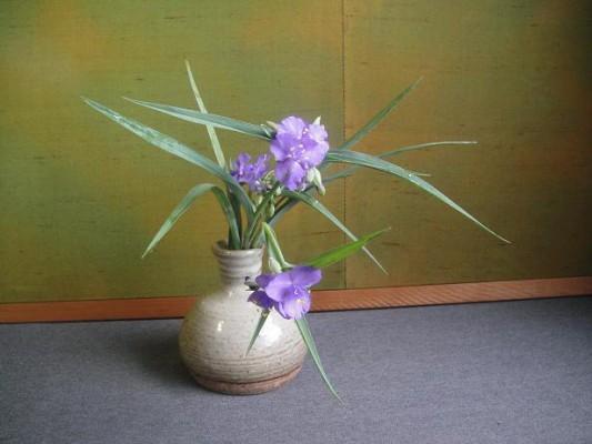 紫ツユクサ