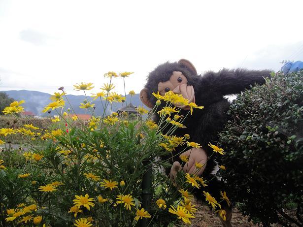 パン君と花