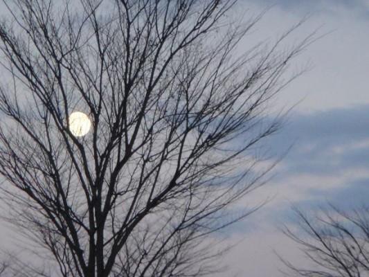 仕事帰り、車の窓から見た月