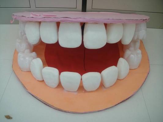 大きな顎模型