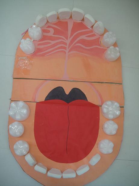 河原顎模型1