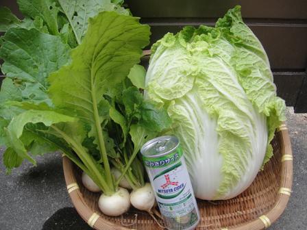 野菜サイダー